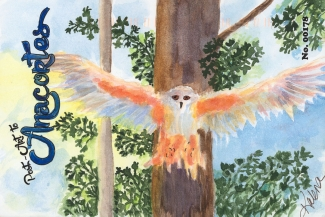 Owl flying down from a tree with wings outspread across the whole post card.